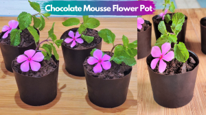 See Edible Chocolate Flower Pot recipe on Food Connections By Madhulika